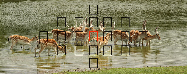 Autofocus point selection – taking control of your pictures