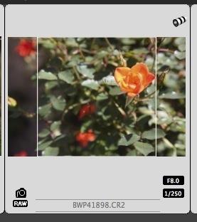 original-crop-dpp-thumbnail