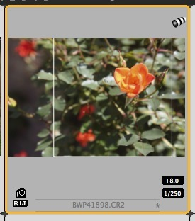 revised-crop-dpp-thumbnail