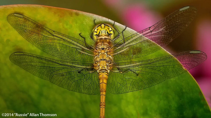 Aussie Allan shoots macro with the Orbis ring flash adapter
