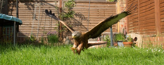 Back garden wildlife photography with wide-angle lenses